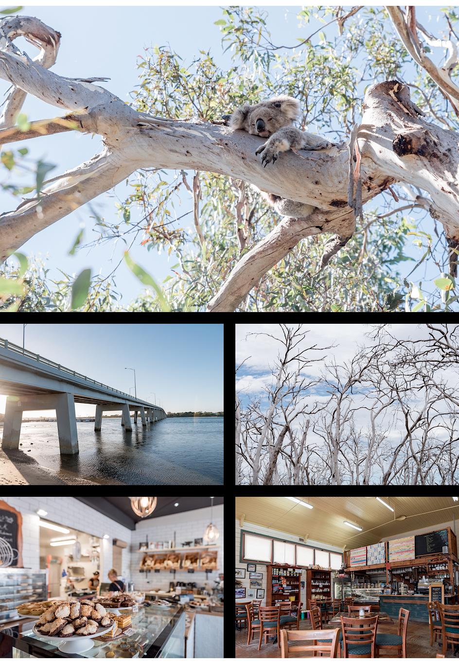 Koala Conservation Centre, Brücke nach Phillip Island, Gum-Trees, Pandesal Bakery, Café in der Nähe von Bairnsdale