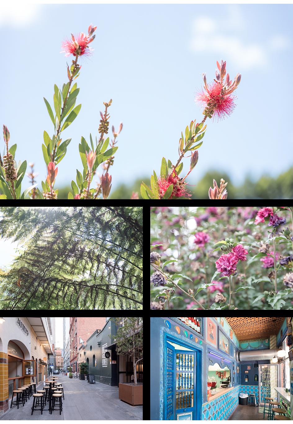 Botanischer Garten, La Moka in der Peel Street, Kutchi Deli Parwana